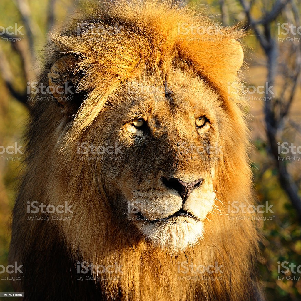 Portrait of a king stock photo