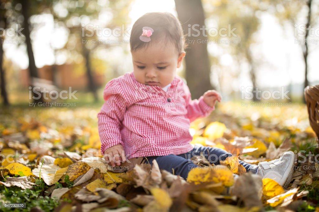 portrait of a little girl sitting on fallen autumn leaves stock photo