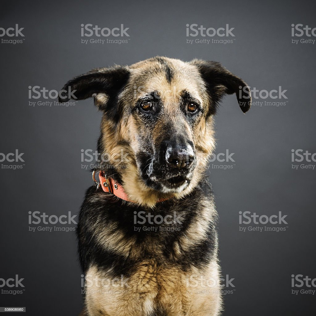 Portrait of a mixed breed dog. stock photo
