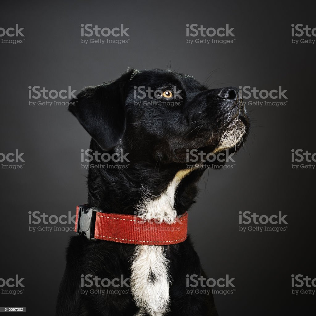 Portrait of a mixed dog. stock photo