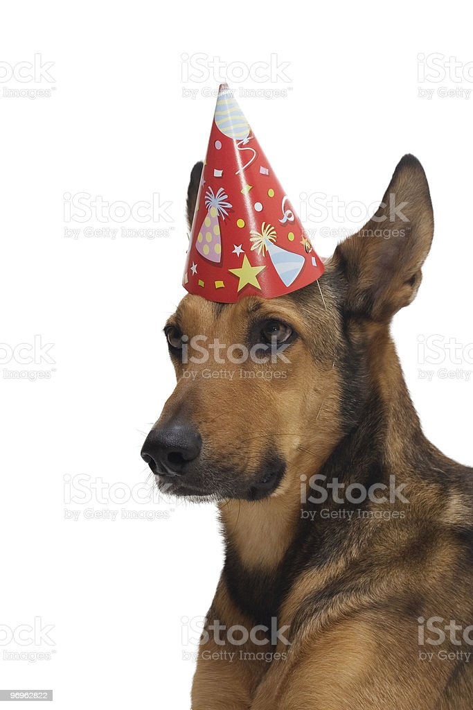 Portrait of a party dog royalty-free stock photo