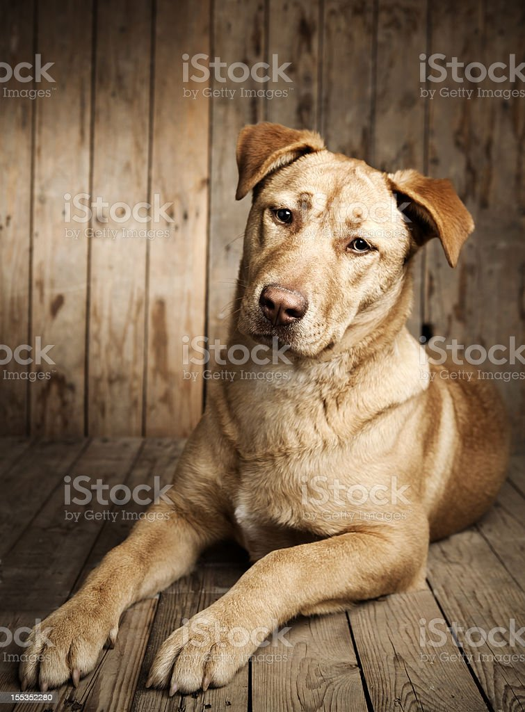 portrait of a puppy dog stock photo
