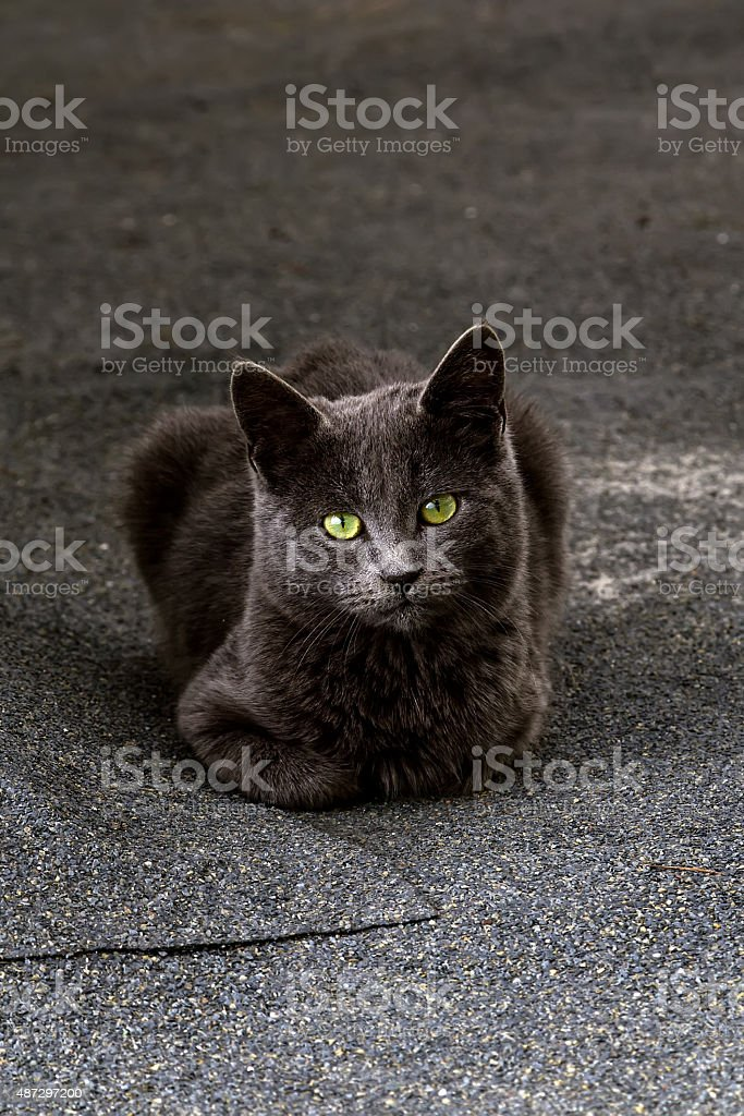 Portrait of a stray cat stock photo