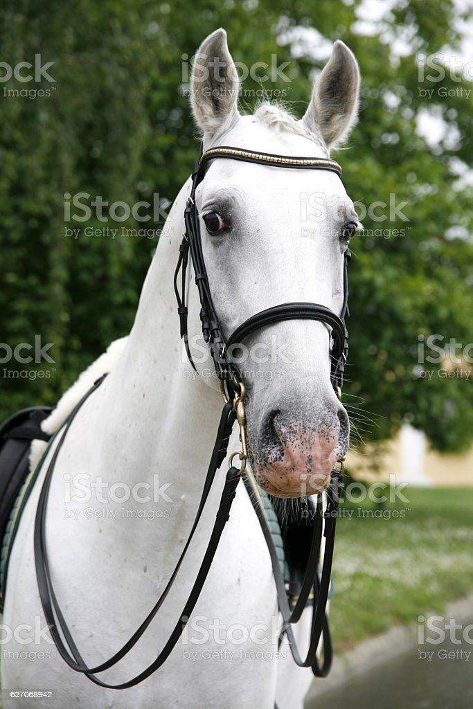 Portrait of a thoroughbred horse at beautiful animal farm stock photo
