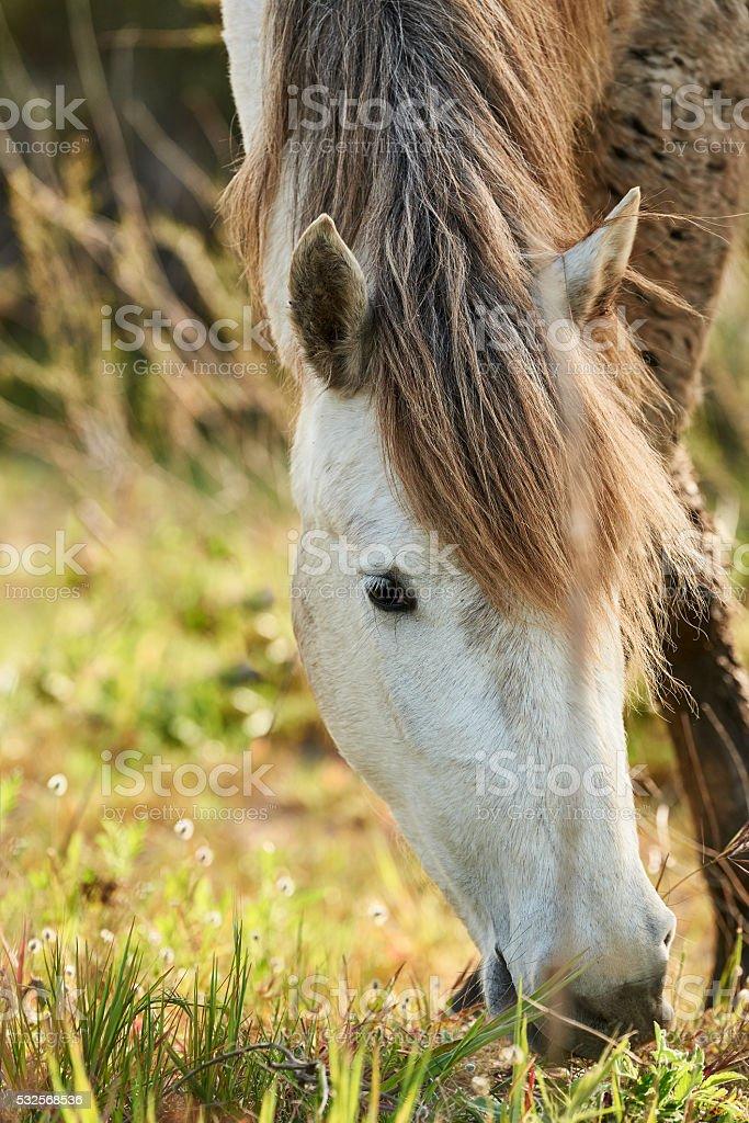 Portrait of a white horse stock photo