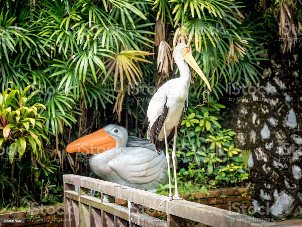 Portrait of a yellow-billed stork stock photo