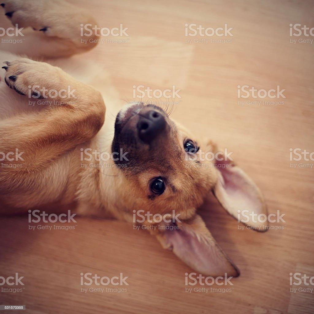 Portrait of an amusing puppy. stock photo