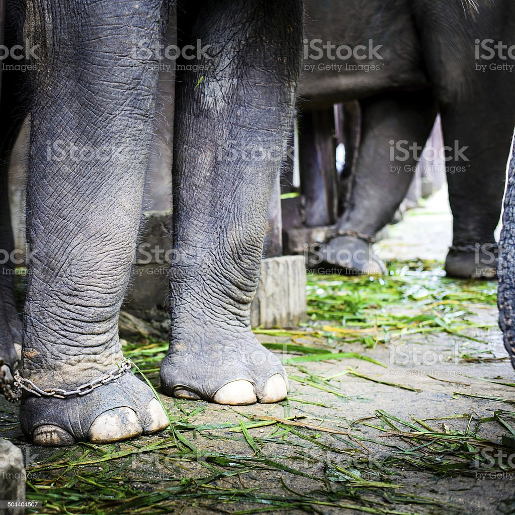 portrait of an elephant royalty-free stock photo