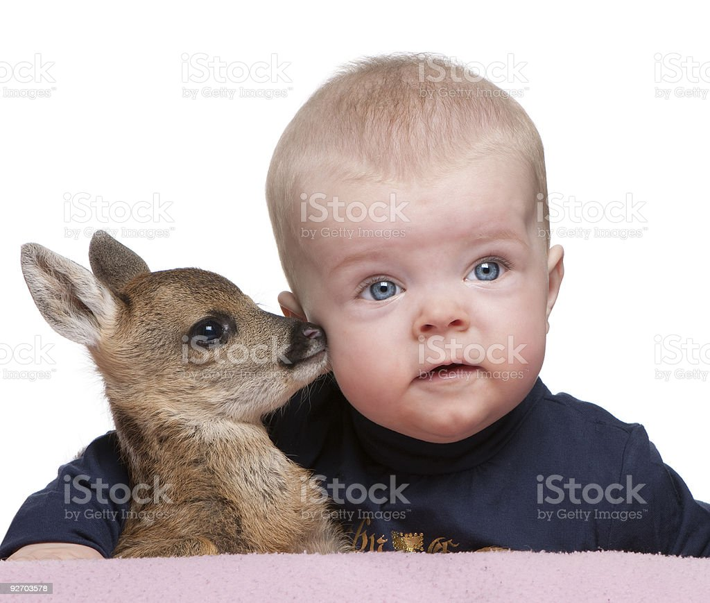 Portrait of baby boy with Fallow Deer Fawn, studio shot royalty-free stock photo