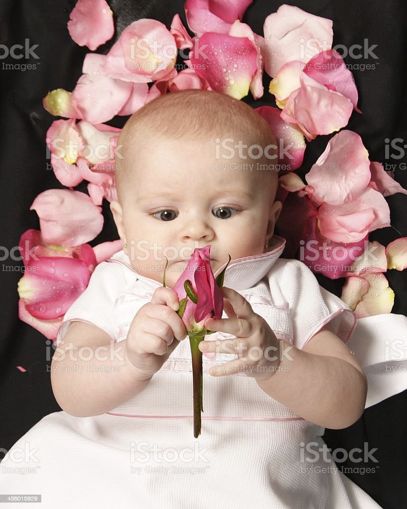 portrait of baby with rose royalty-free stock photo