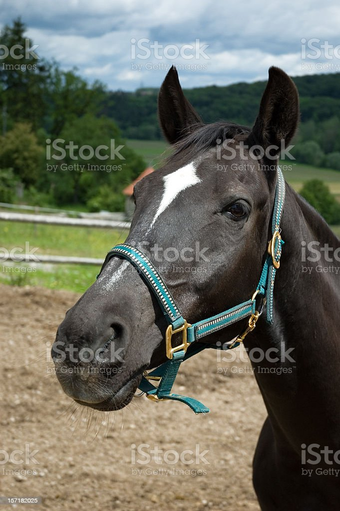 Portrait of beautiful Horse royalty-free stock photo