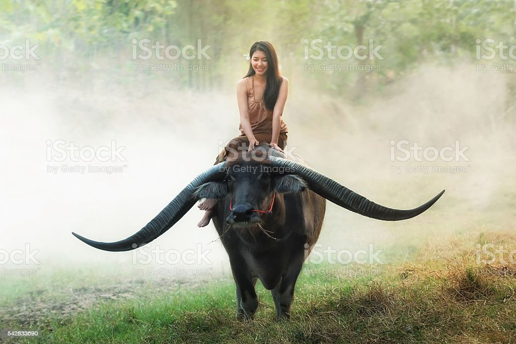 Portrait of beautiful young woman playing with buffalo outdoor stock photo