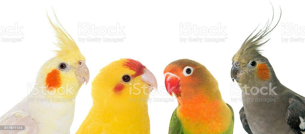 portrait of birds stock photo