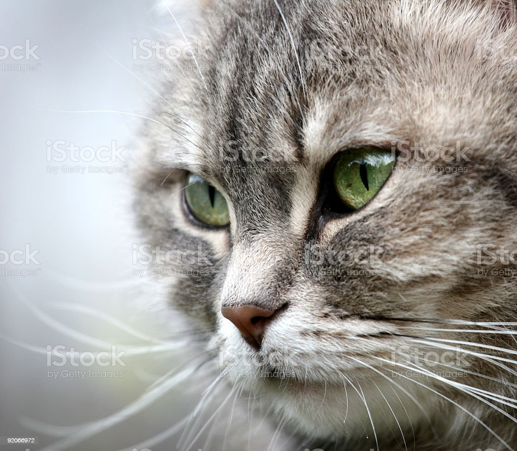 portrait of cats royalty-free stock photo