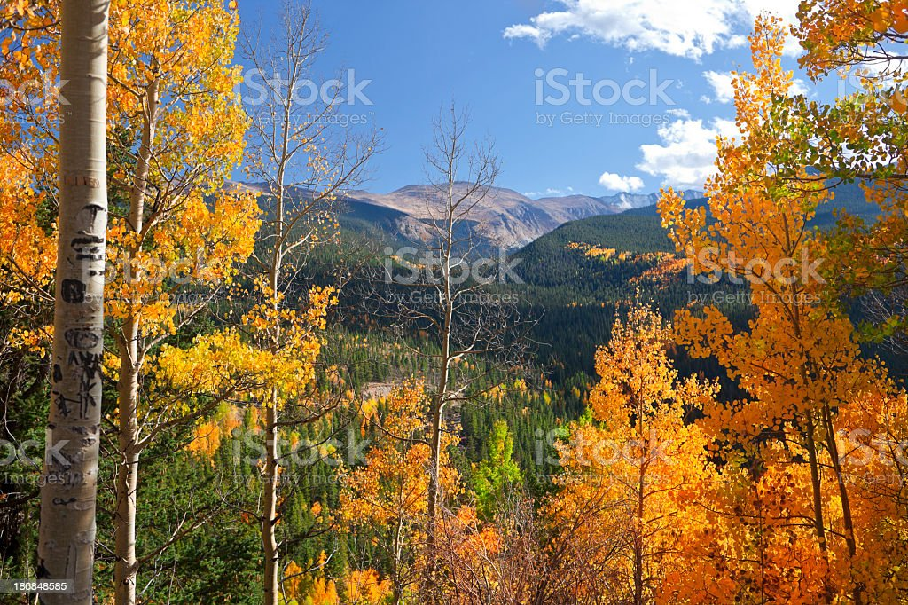 Portrait of Colorado landscape in fall with colored leaves stock photo