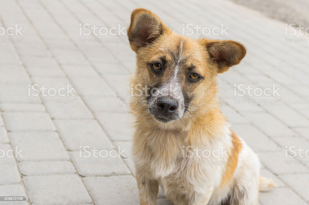 Portrait of cute mixed breed curious dog stock photo