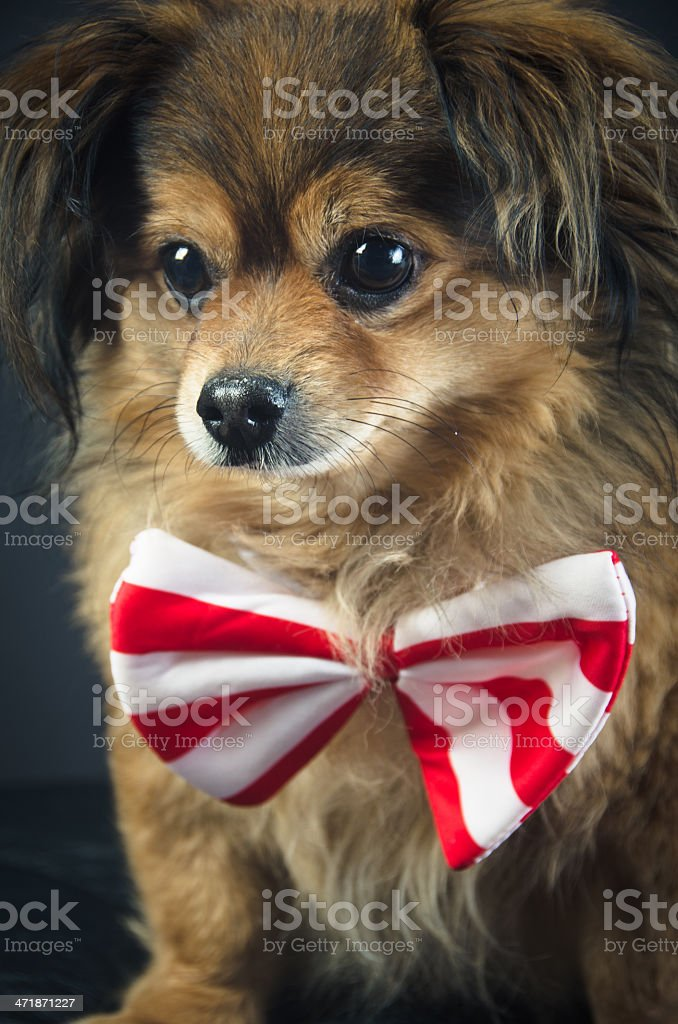 Portrait of Dog royalty-free stock photo