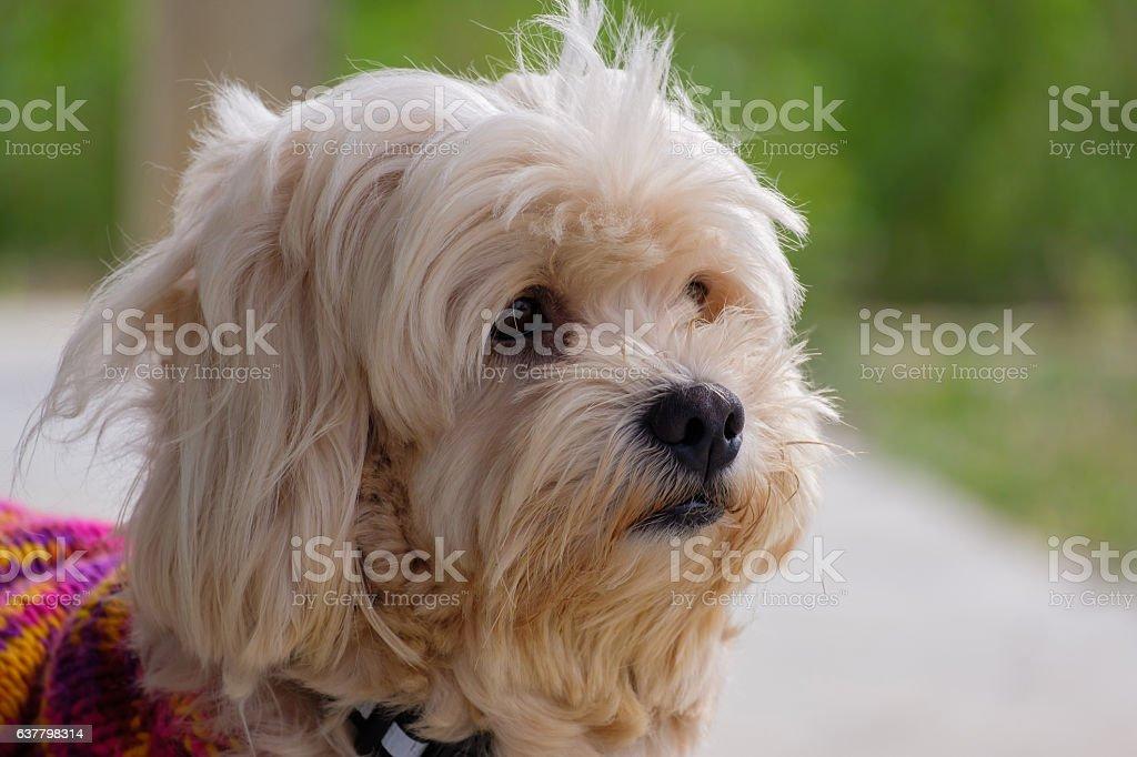 Portrait of dog. stock photo