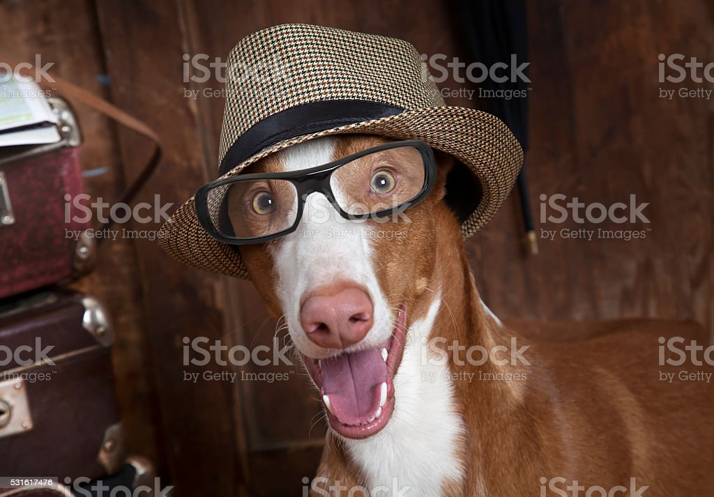 Portrait of dog with glasses and hat stock photo