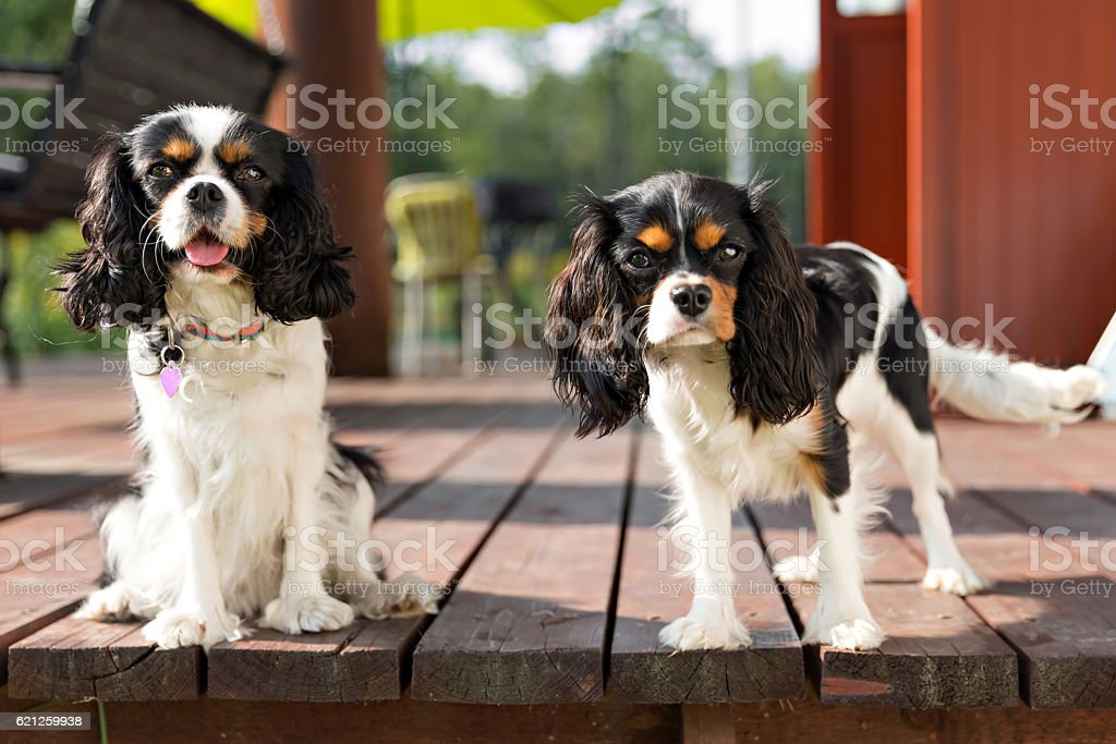 portrait of dogs stock photo