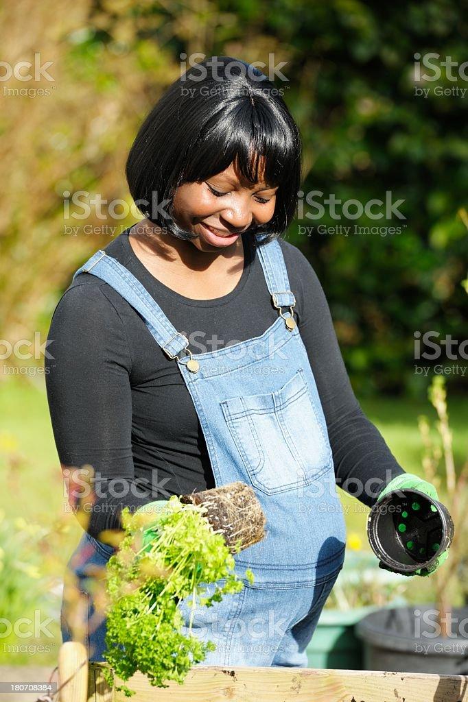 Portrait Of Happy Pregnant Woman Gardening royalty-free stock photo