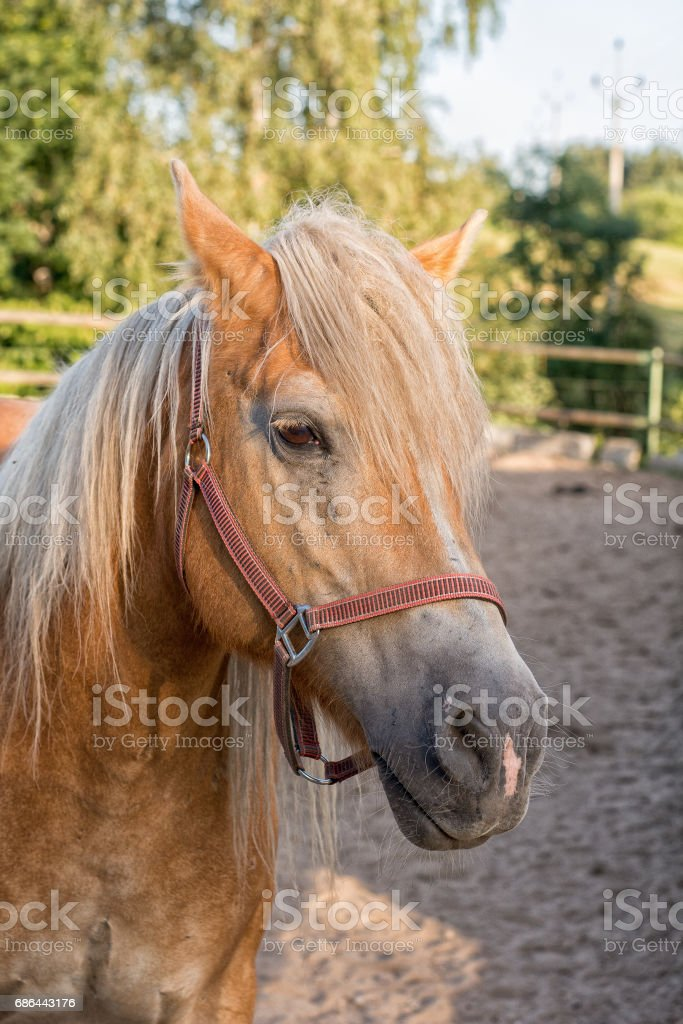 Portrait of head of brown horse stock photo