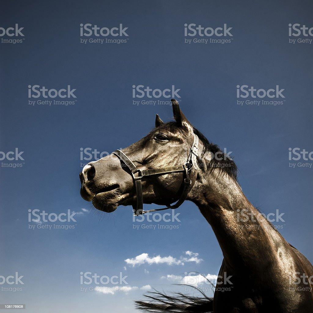Portrait of Horse Against Blue Sky stock photo