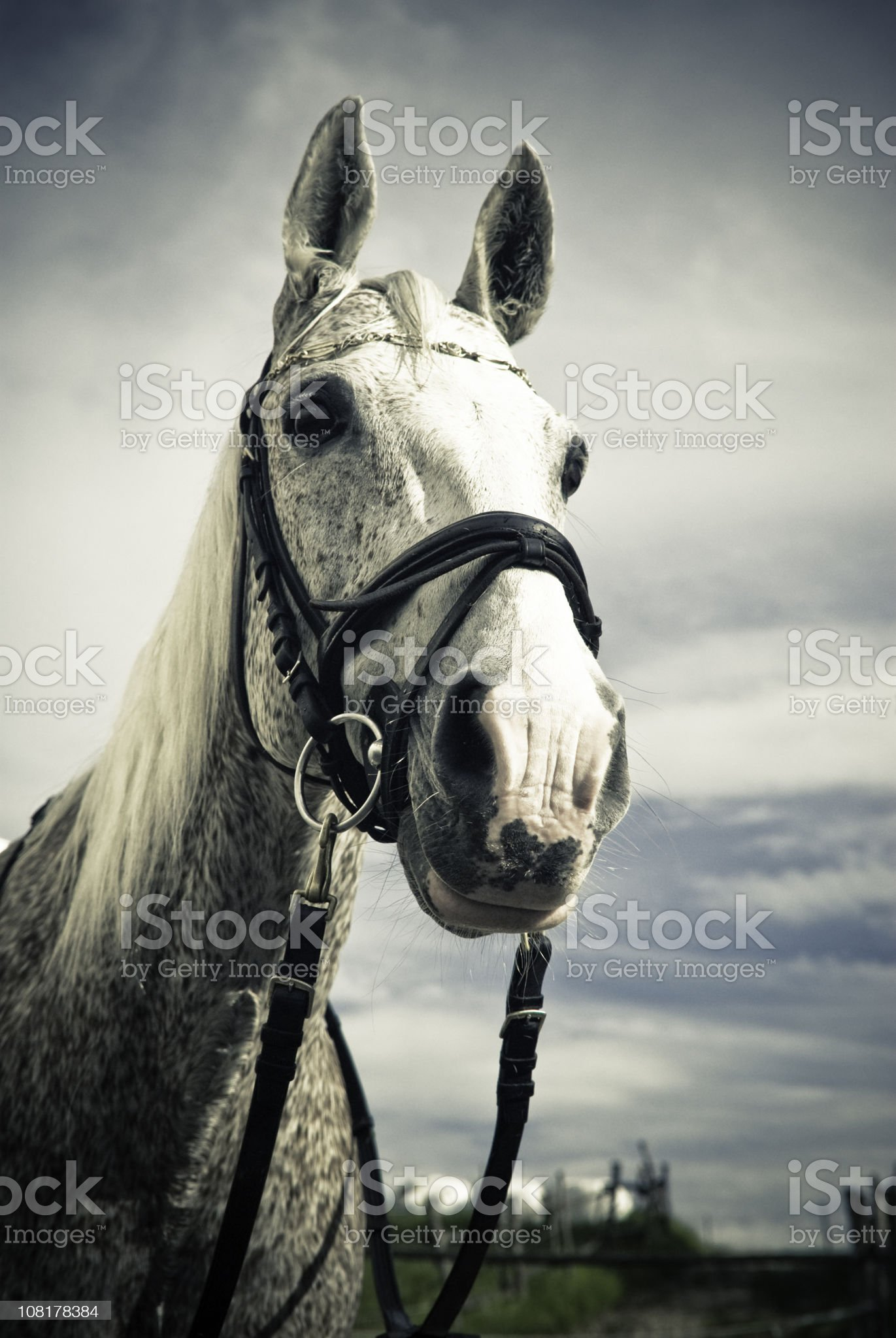 Portrait of Horse in Field royalty-free stock photo