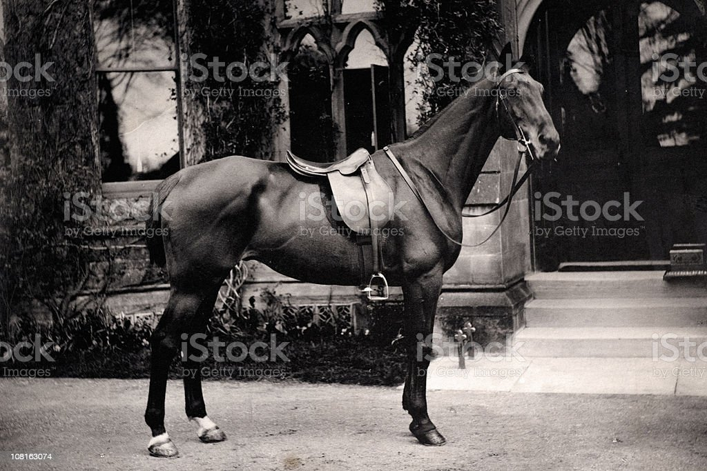 Portrait of Horse with Bridle Standing Outside House royalty-free stock photo