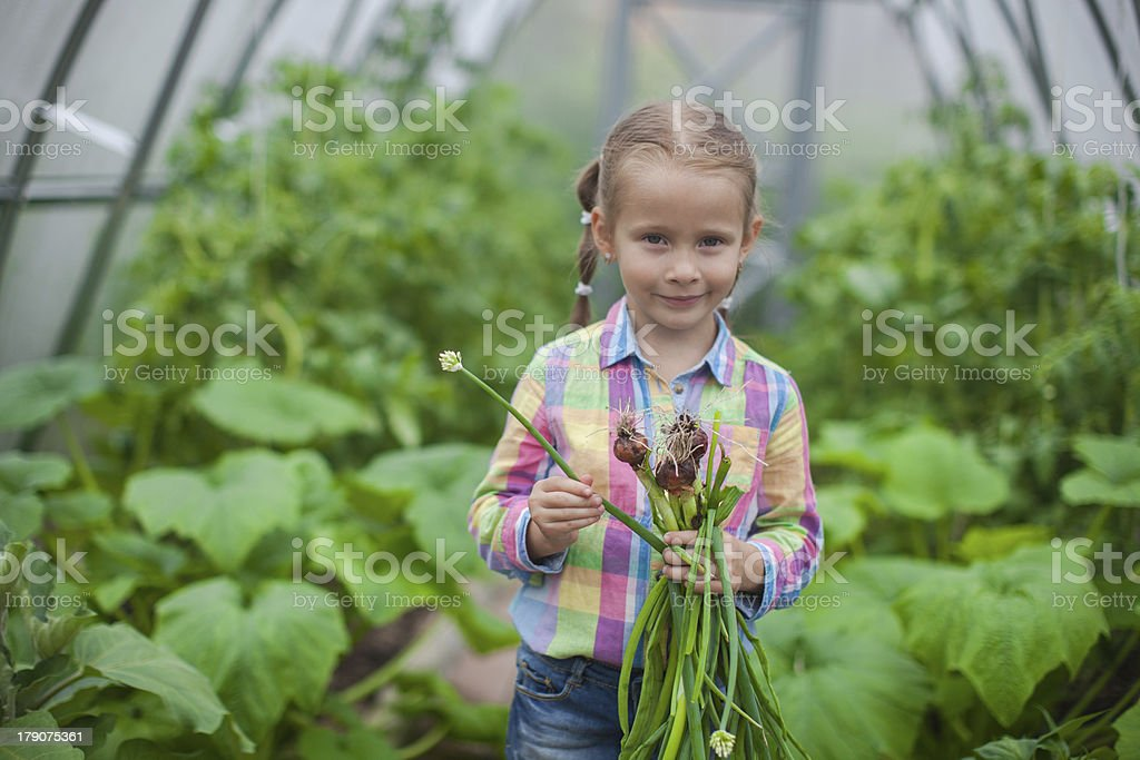 Portrait of little girl collects the crop onions in greenhouse royalty-free stock photo