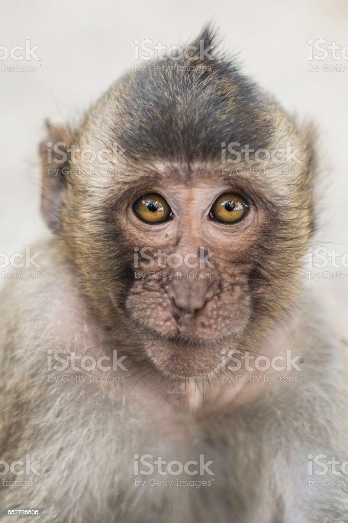 Portrait of little monkey stock photo