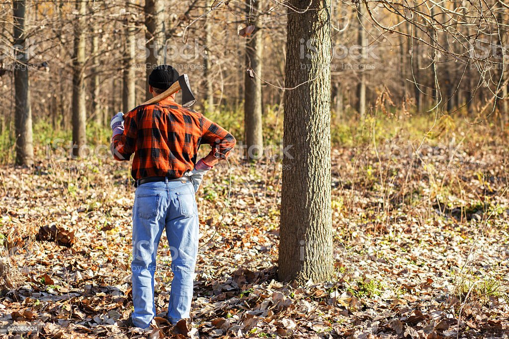Portrait of lumberjack in nature stock photo
