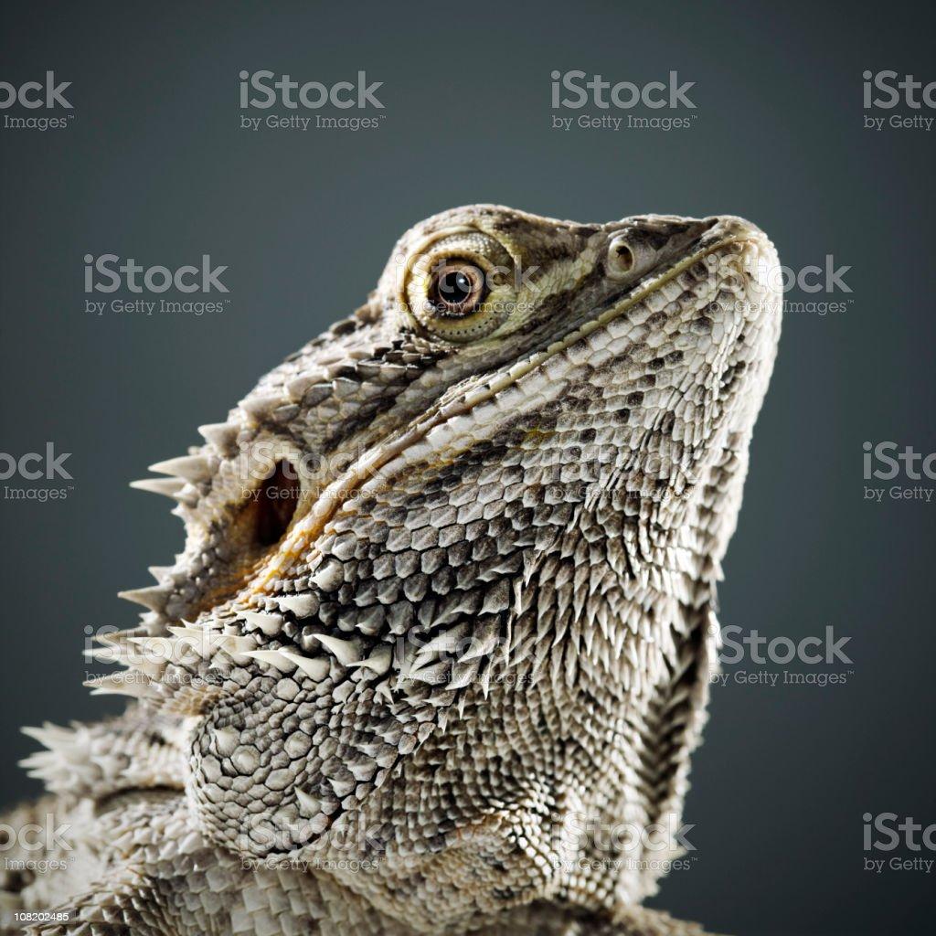 Portrait of Reptile stock photo