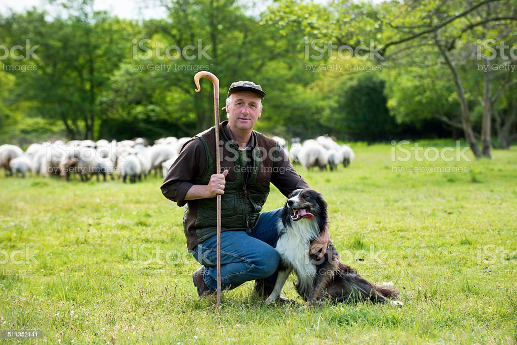 portrait of Shepherd with his dog, flog in the back stock photo