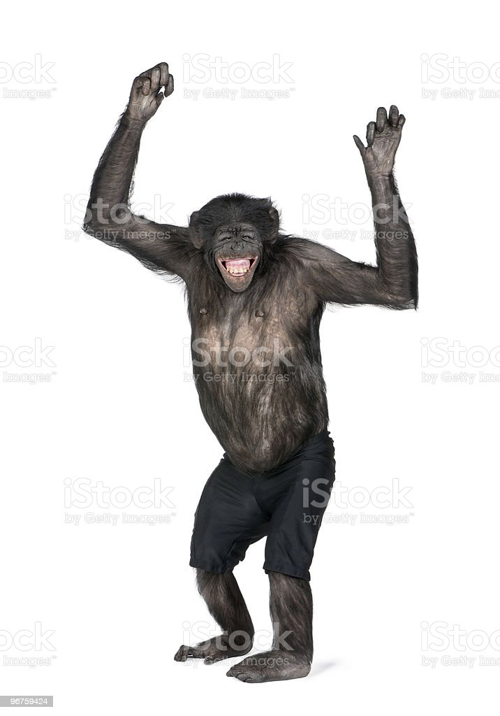 Portrait of smiling chimpanzee in shorts with arms raised stock photo