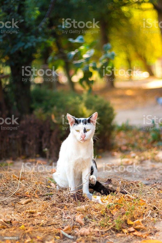 Portrait of stray cat sitting under solar beam stock photo