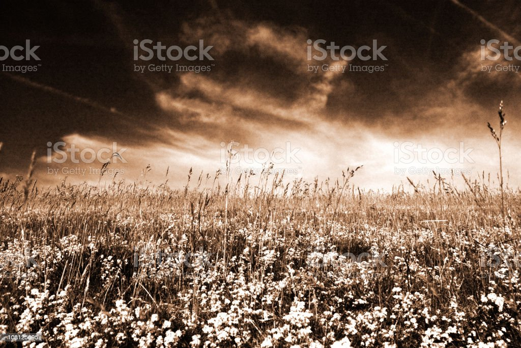 Portrait of Summer Meadow, Sepia Toned royalty-free stock photo