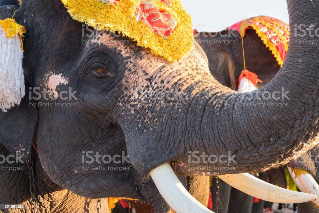 Portrait of Thai male elephant stock photo