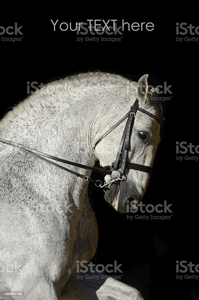 Portrait of the white sport horse royalty-free stock photo