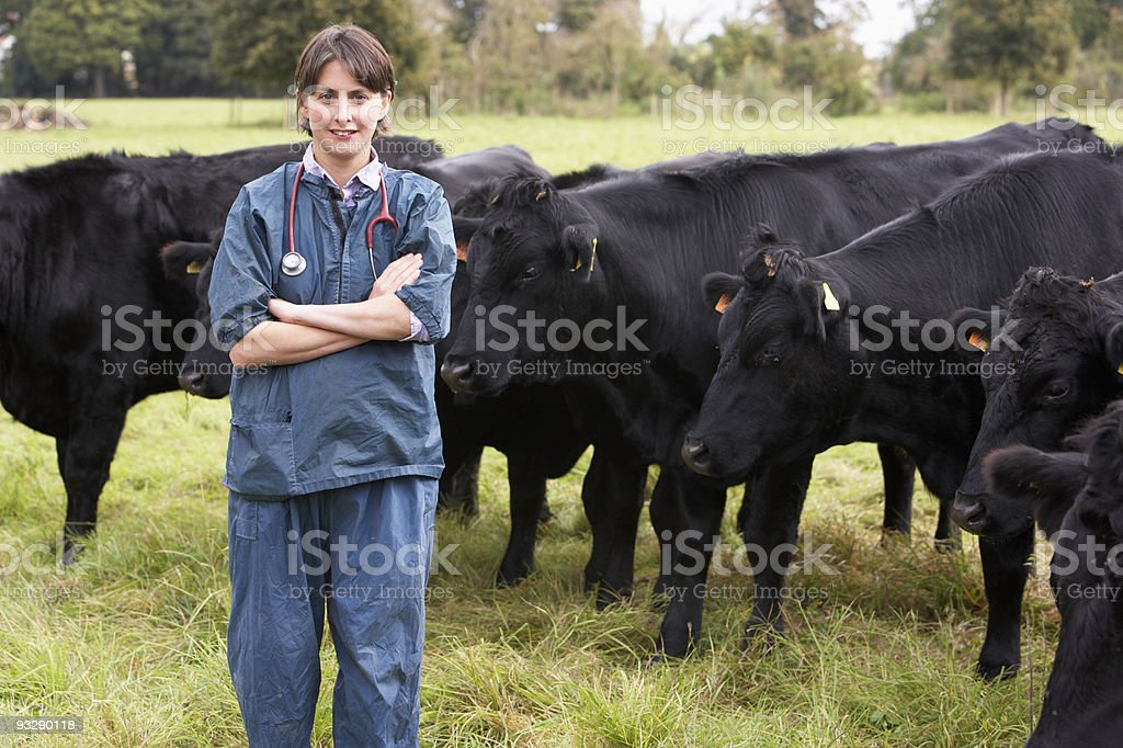 Portrait Of Vet In Field With Cattle stock photo
