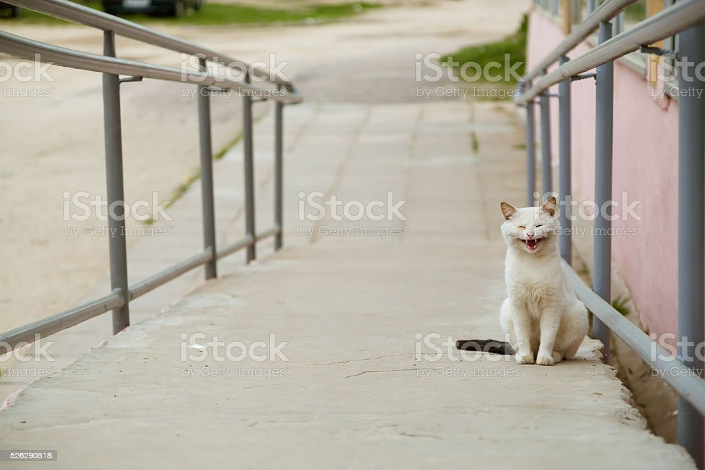 Portrait of white cat looking at camera stock photo