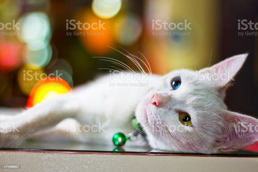 Portrait of White Cat (heterochromia) stock photo