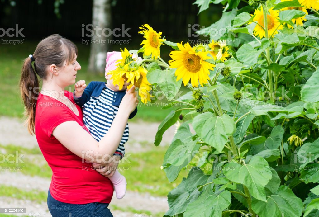 Portrait of woman and baby girl in the sunflower field in summer. Outdoors picture in the park stock photo