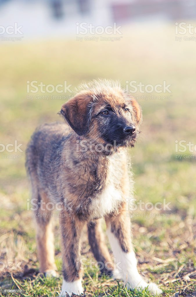 portrait of young dog on grass stock photo