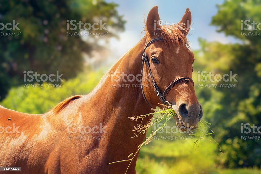Portrait of young horse. stock photo
