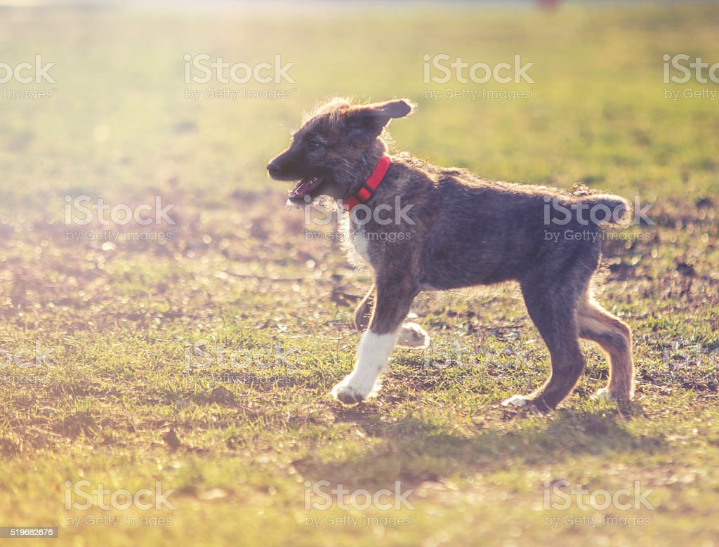 portrait of young sweet dog on grass stock photo