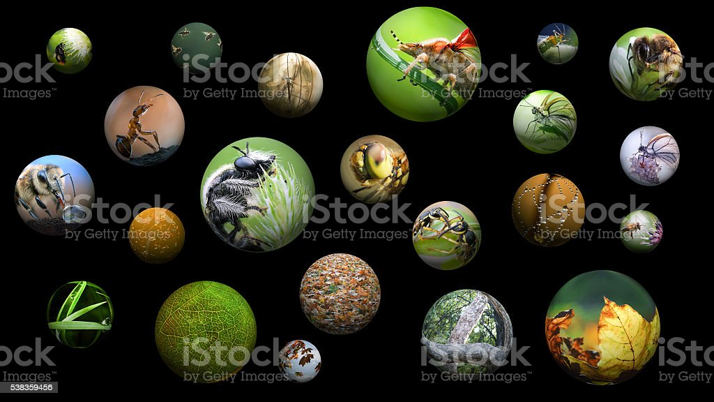 Portraits of insects in the balls stock photo