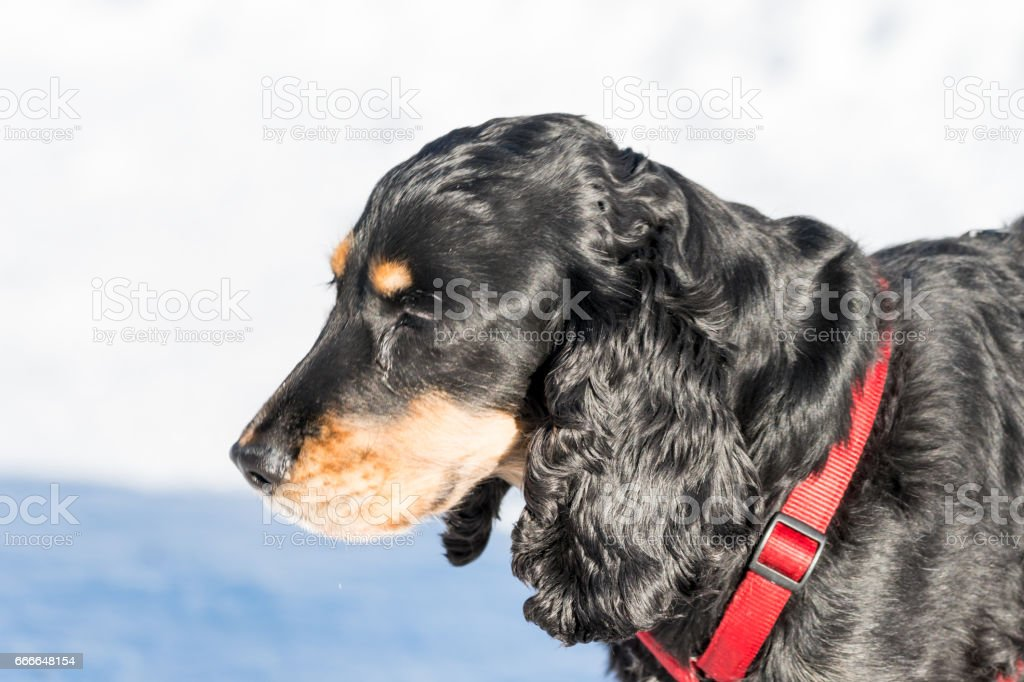 Portraiture of cute dog with snow in Background stock photo
