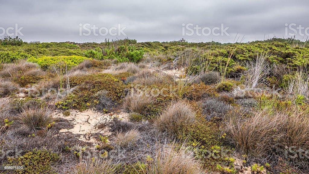 Portugal - Coastline with ocean stock photo