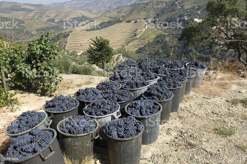 Portugal Douro royalty-free stock photo
